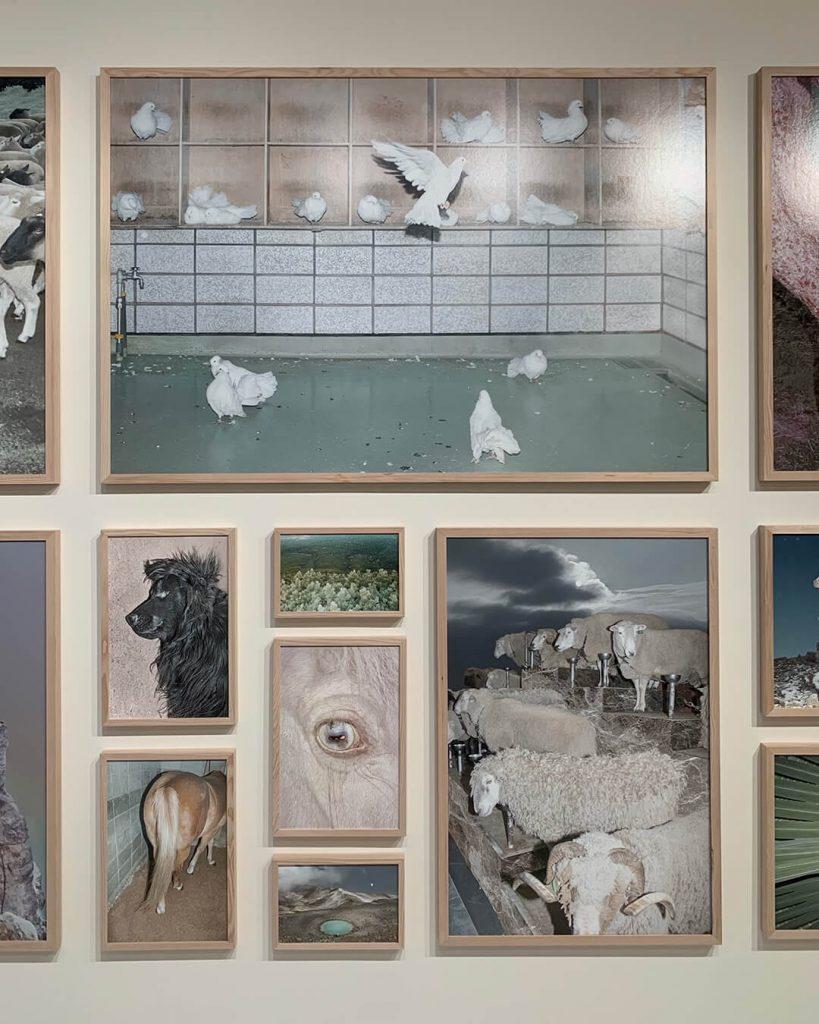 chorareii_ayakaendo_photography_kamuymosir_exhibition_kitte_3