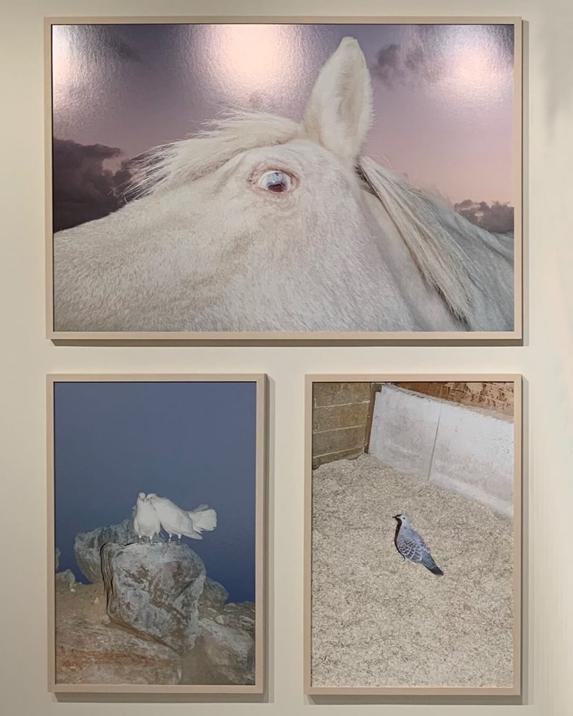 chorareii_ayakaendo_photography_kamuymosir_exhibition_kitte_2