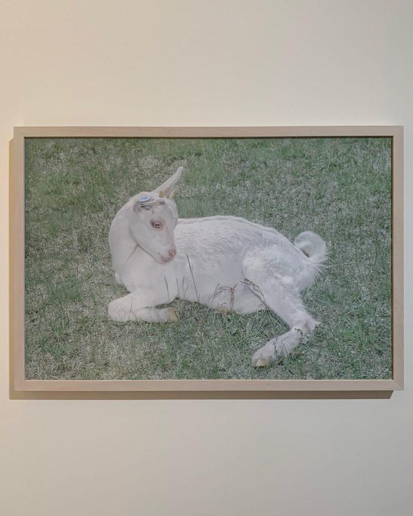 chorareii_ayakaendo_photography_kamuymosir_exhibition_kitte_lamb