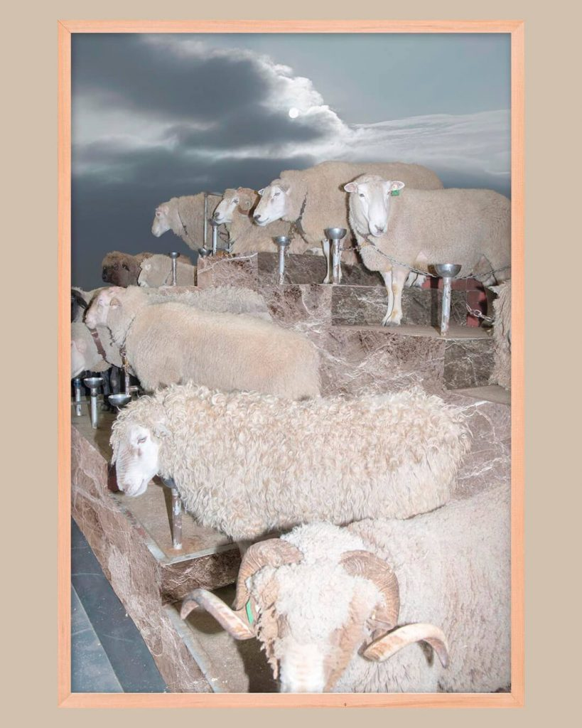 chorareii_ayakaendo_photography_kamuymosir_exhibition_kitte_sheeps